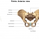 Massage for Pelvic Girdle Pain