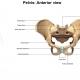 Massage for Pelvic Girdle Pain