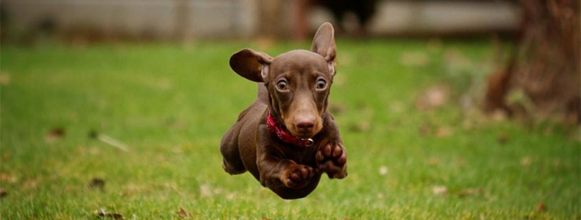 Dog running - london marathon injury