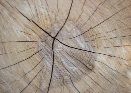 treatment of scar tissue - wood